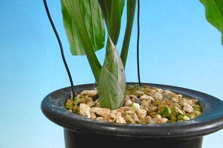 芽フトール(鉢混合活性剤)