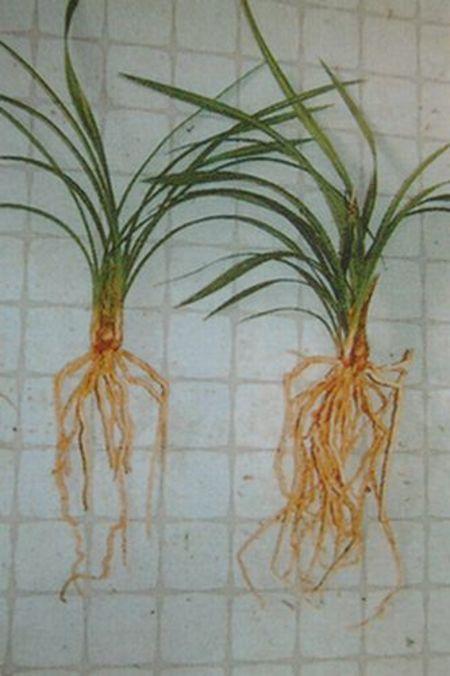 ネフトール(植物光合成活性液) 2L